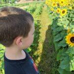 sunflower field connor